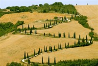The famous winding road with cypresses from la Foce to Castelluccio, near Siena (Tuscany, Italy) at summer .jpg